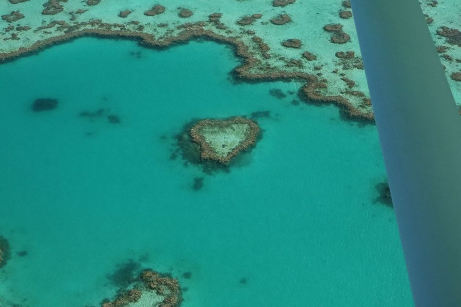 Heart Shape Great Barrier Reef Water High Angle View Aerial View Sea Nature No People Tranquility Day Beauty In Nature Outdoors