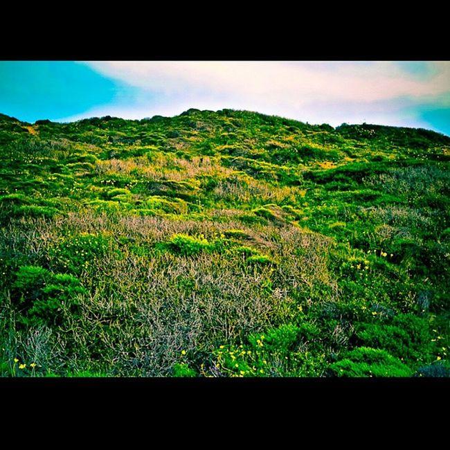 Greener on the other side. Torreypines