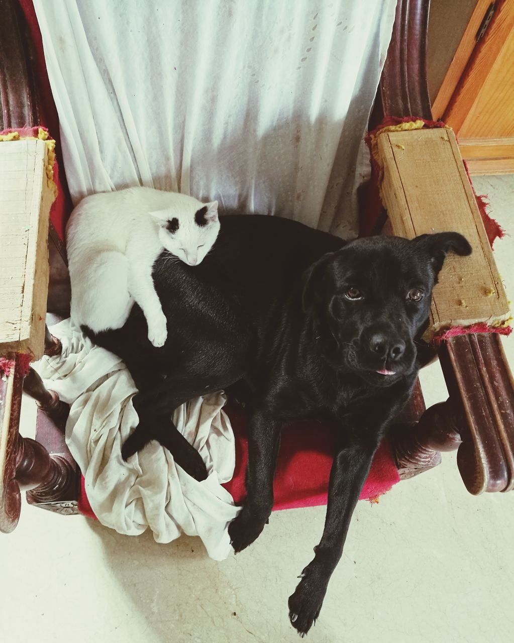 High Angle View Of Cat And Dog
