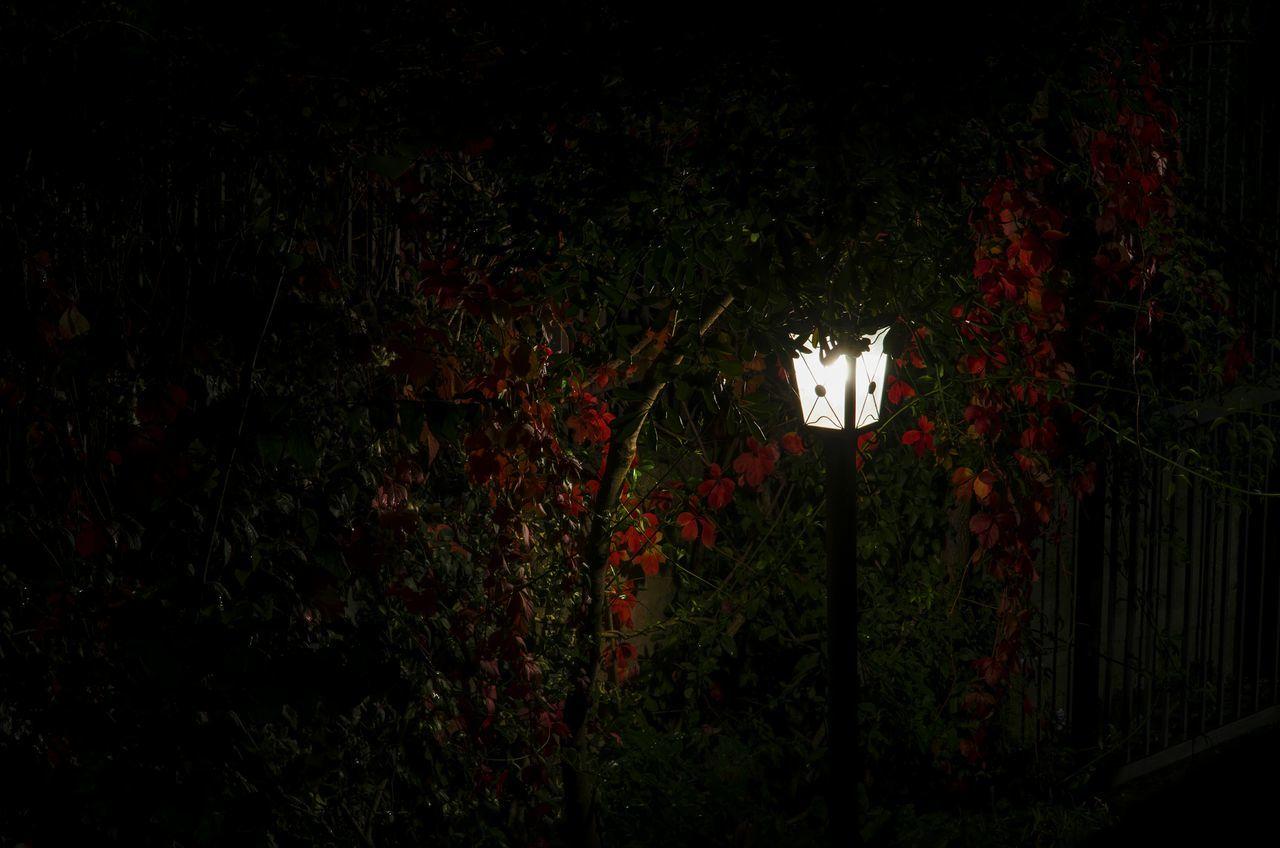 Outdoors Illuminated No People Night Dark Night No People Text Low Angle View Illuminated Outdoors Nightphotography Night Lights Night Photography Nikon D7000 Plant Plants Lamp Lamplight