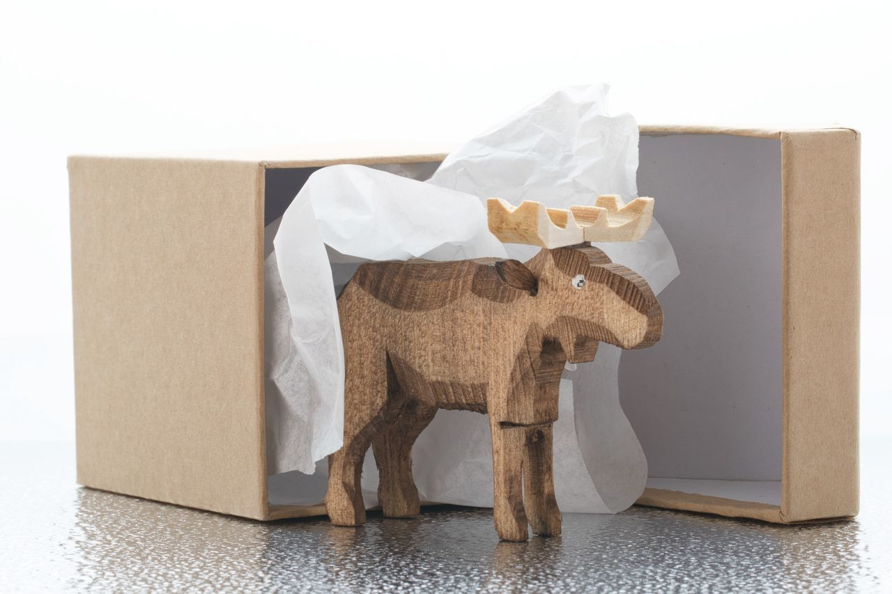 indoors, no people, box - container, cardboard box, white background, close-up, mammal, day