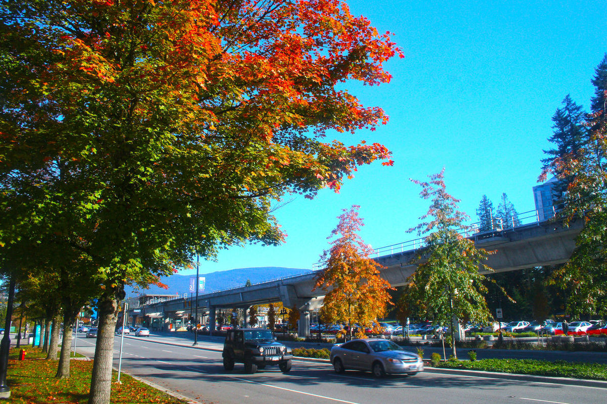 Autum colors in Coquitlam B.C. Canada. Tree Growth Nature Cityscape Tree Growth Canada B.C Coquitlam Outdoors Sky
