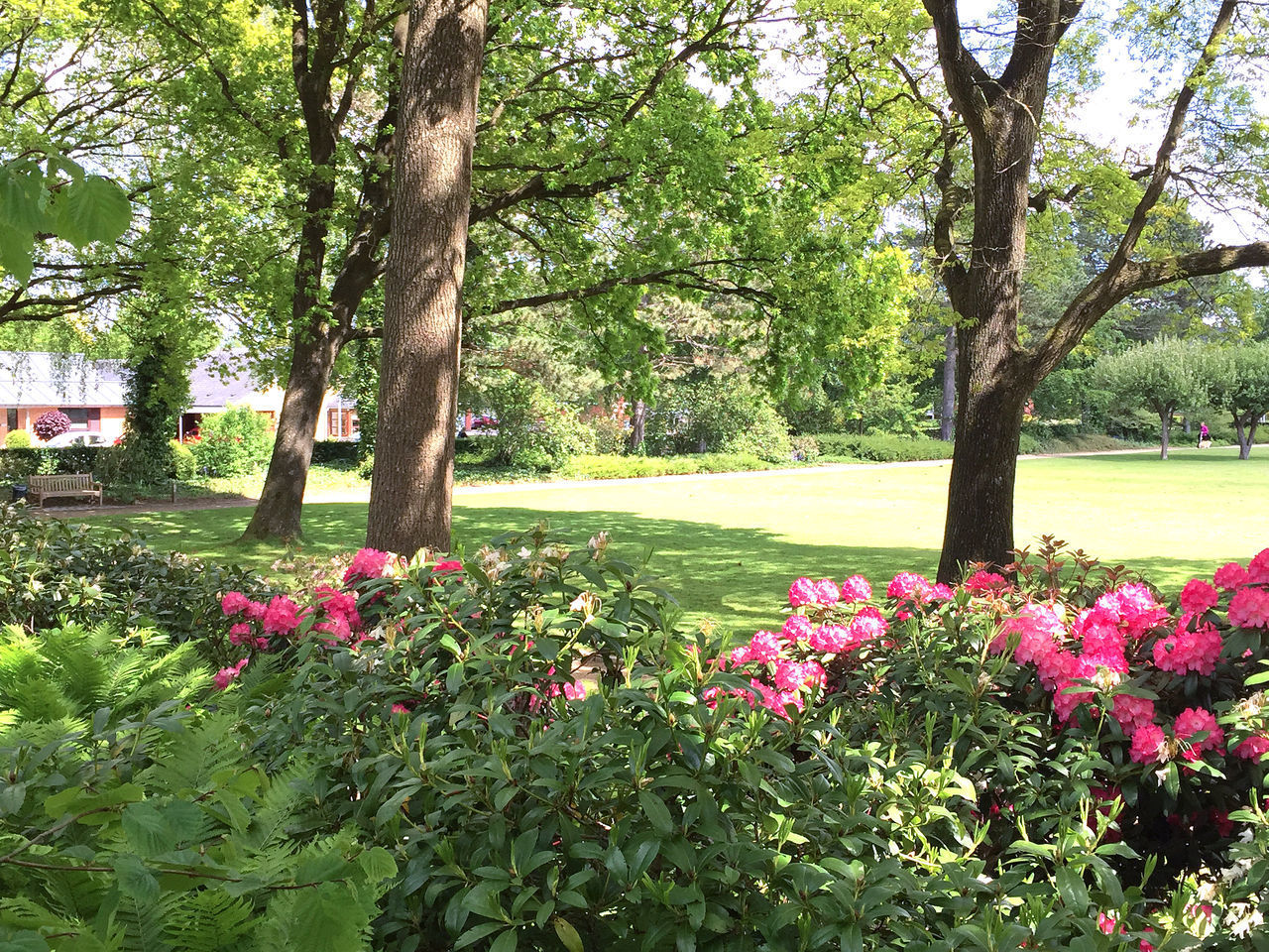 Nature in the city park under summer Beauty In Nature Beauty In Nature Botanical City Colorful Colorfull Day Flor Flower Flowers Fragility Green Color Green Color Growth Image Nature Nature Outdoors Park Park - Man Made Space Stockholm Tranquility Tree Tree Trunk Trees