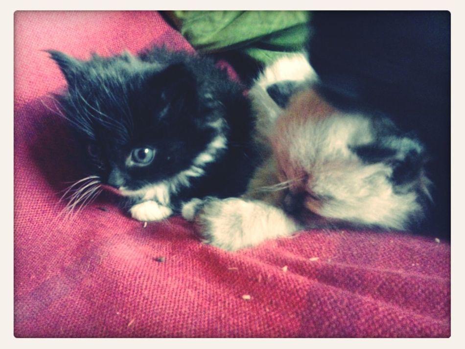 kitty Taking Photos Falling Asleep