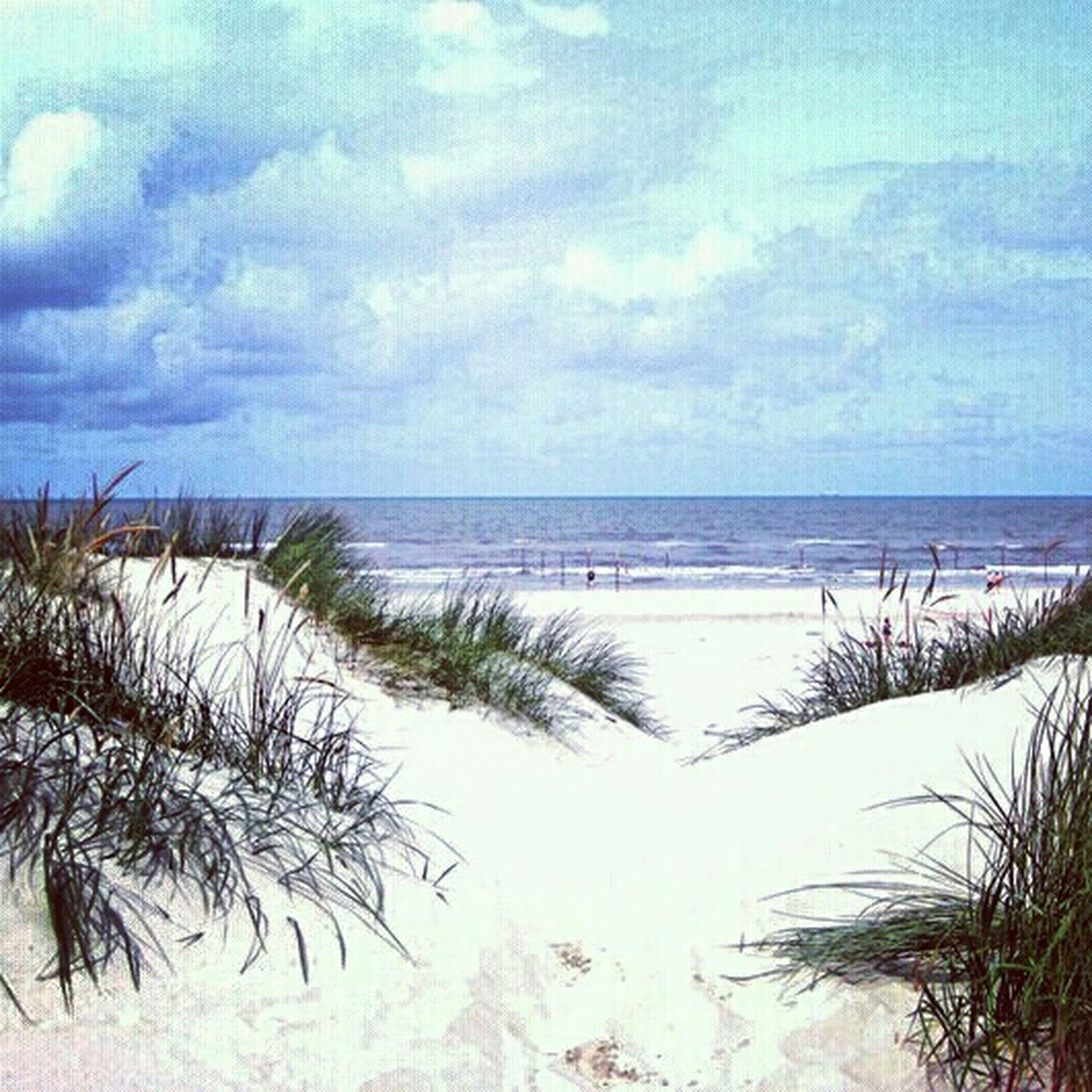 sea, horizon over water, water, beach, sky, tranquil scene, tranquility, scenics, beauty in nature, shore, nature, sand, cloud - sky, cloud, plant, idyllic, growth, ocean, coastline, cloudy