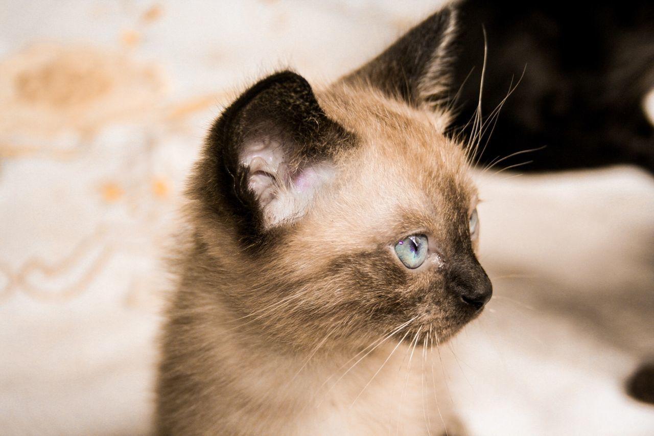 Beautiful stock photos of kitty, Animal Themes, Carnivora, Cat, Close-Up