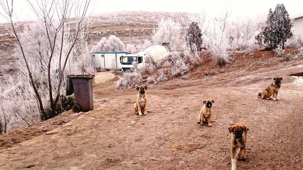 My Best Photo 2015 EyeEm Best Shots - Nature My Winter Favorites Sony Xperia Z3 Dogs Of EyeEm Snow Love Turkey Sivas