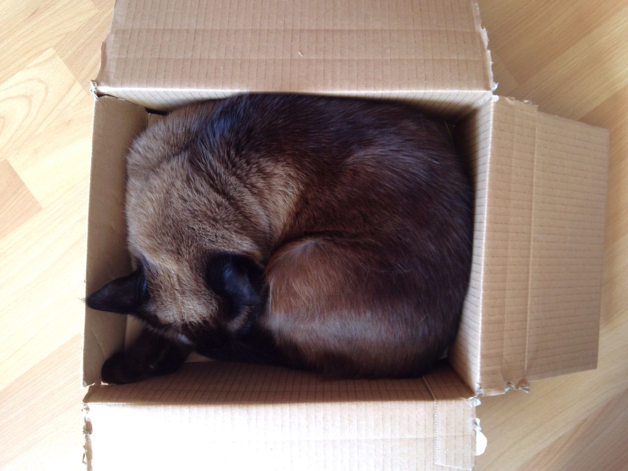 Perfect Fit Cat Cat In A Box Cardboard Box Cardboard Pets Box - Container One Animal Mammal Indoors  Domestic Cat No People Domestic Animals Lying Down Animal Themes Sleeping Curled Up