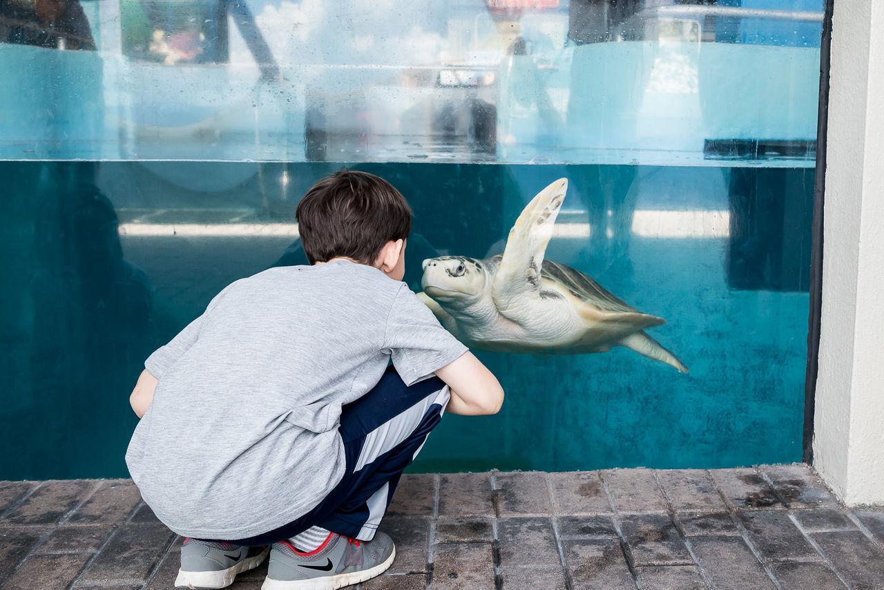Aquarium Aquarium Life Childhood Day Exploring Glass - Material Person Turtle Water