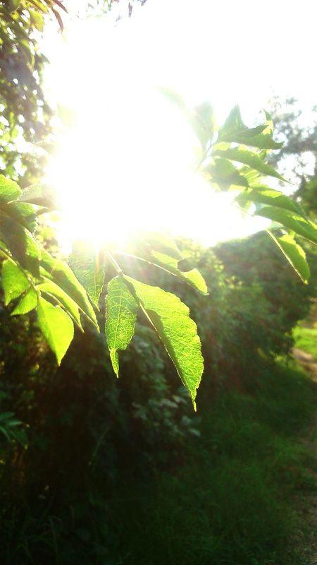 Life Is Beautiful Sunlight Hungary First Eyeem Photo