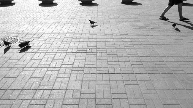 Pivotal Ideas Shadows Shadows & Lights Shadow Hard Light Sony Xperia Zr Street Photography Streetphotography Black And White Blackandwhite Black And White Photography Lines Lines And Shapes Geometry Abstract Geometric Abstraction Floor Mobilephotography Mobile Photography