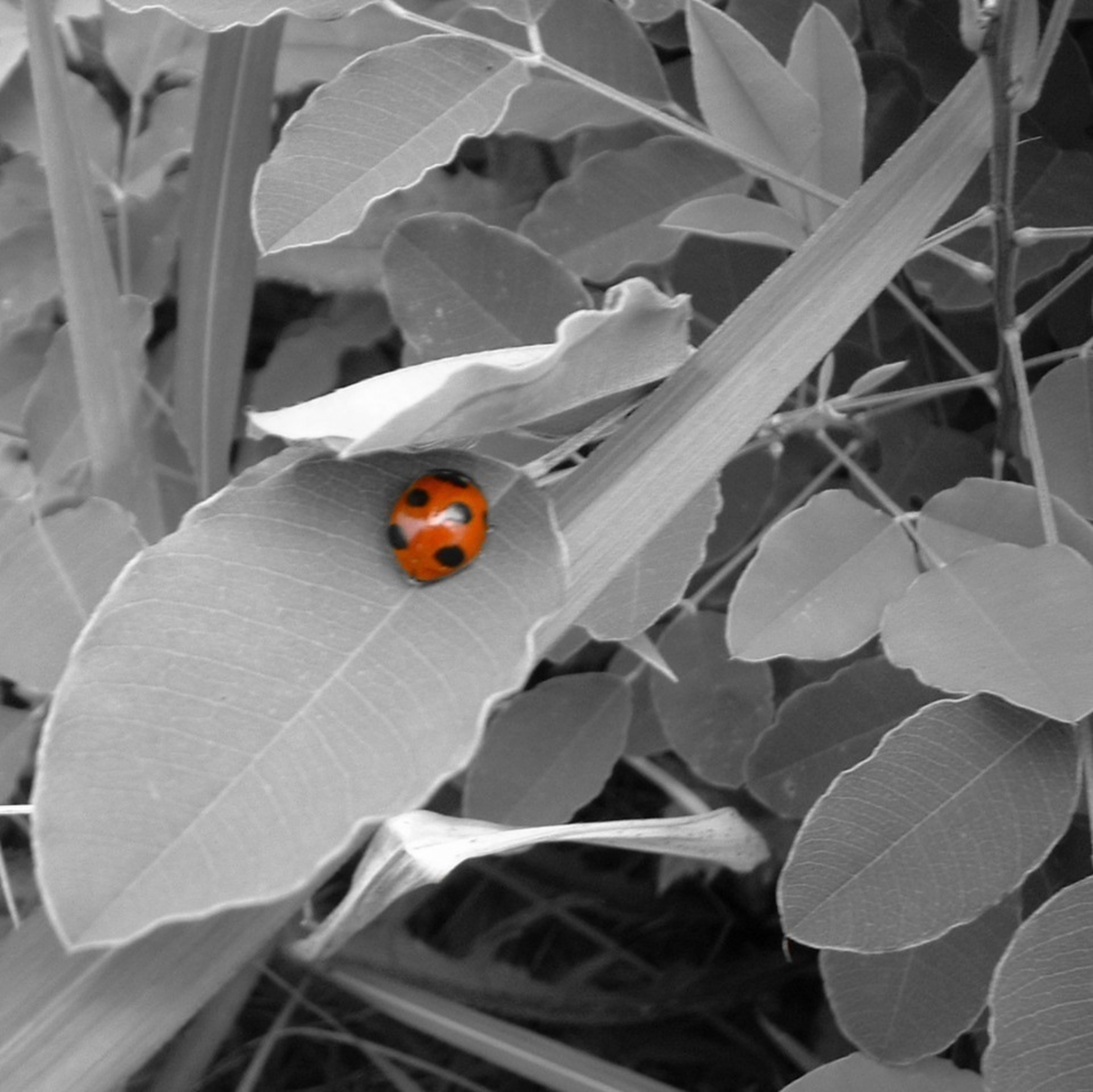 animal themes, one animal, insect, animals in the wild, wildlife, leaf, ladybug, close-up, nature, plant, butterfly - insect, perching, high angle view, orange color, beauty in nature, fragility, growth, butterfly, selective focus, outdoors