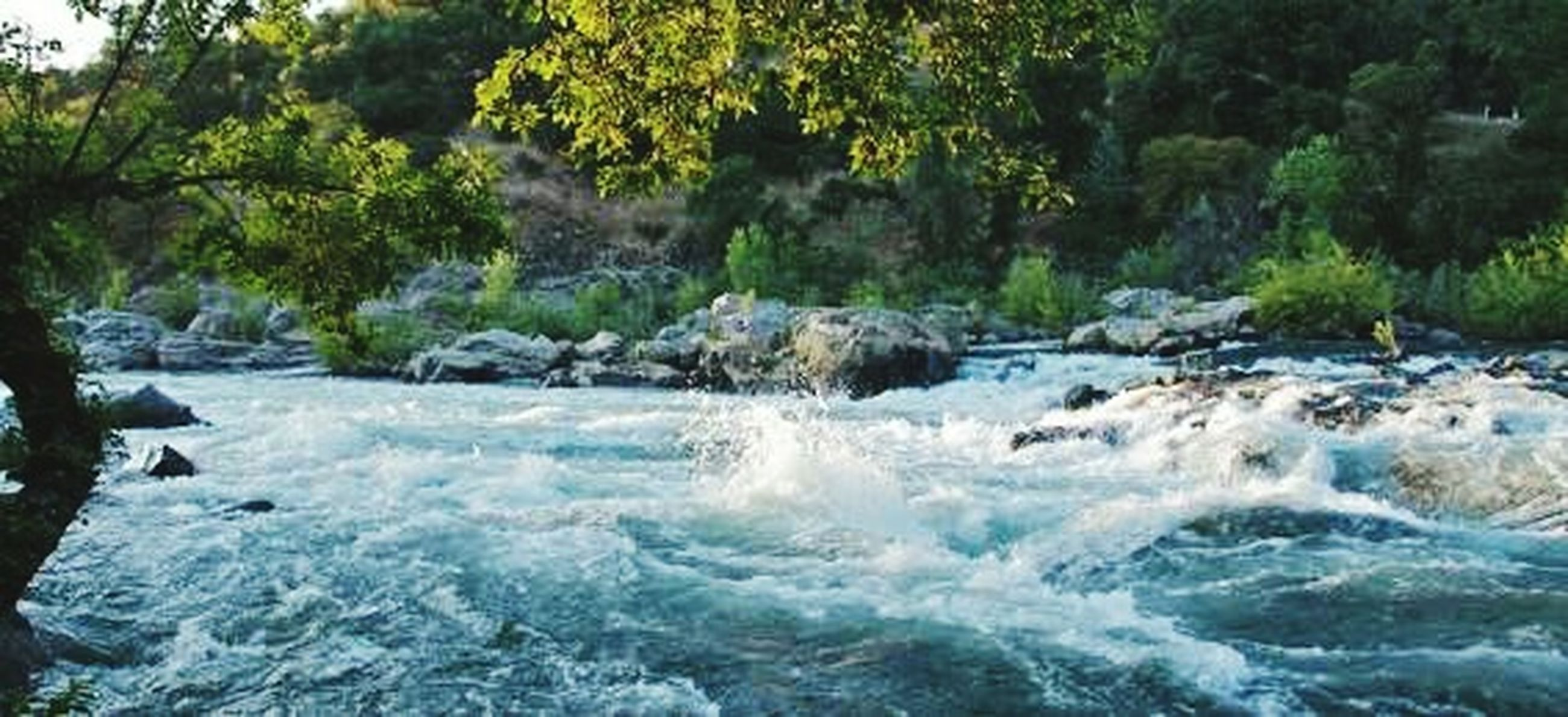 water, nature, motion, beauty in nature, waterfall, flowing, outdoors, no people, splashing, scenics, day, tree