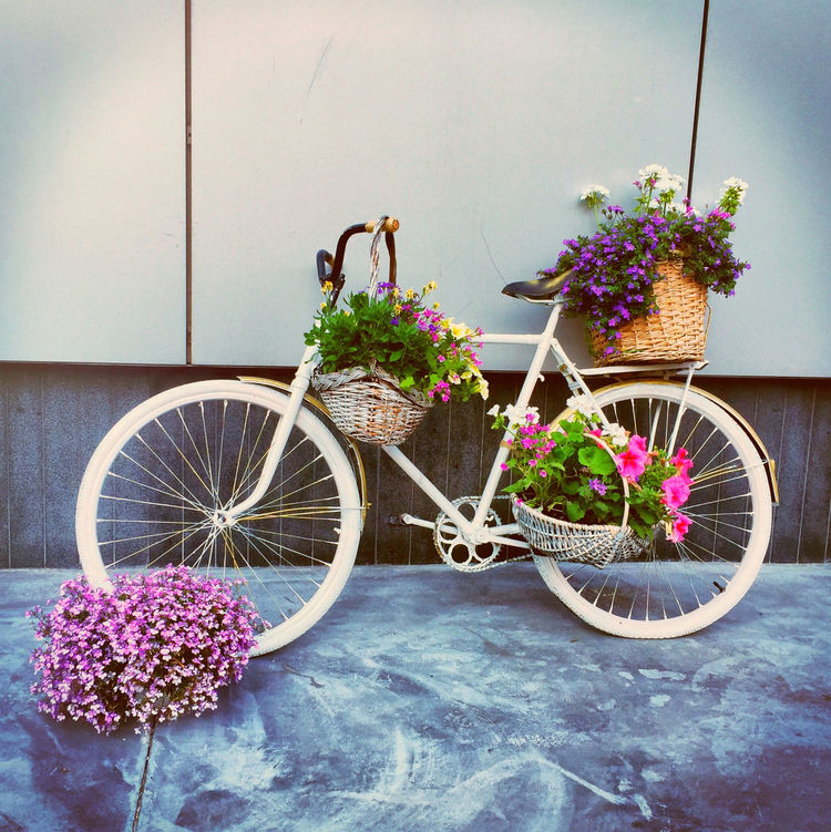 Bicycle Celebrate Your Ride Day Elégance Front Or Back Yard Mode Of Transport Parking Plant Potted Plant CyclingUnites Flower Fragility Growth Hanging Basket Land Vehicle Multi Colored No People Outdoors Petal Plants Stationary Potted Plants
