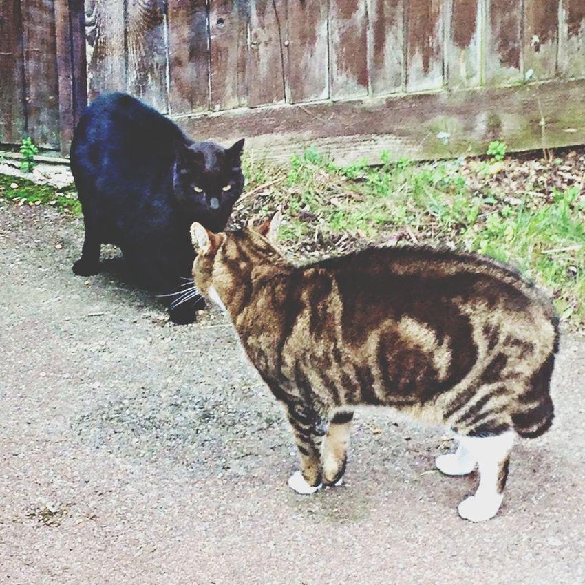 Cat Mexican Standoff