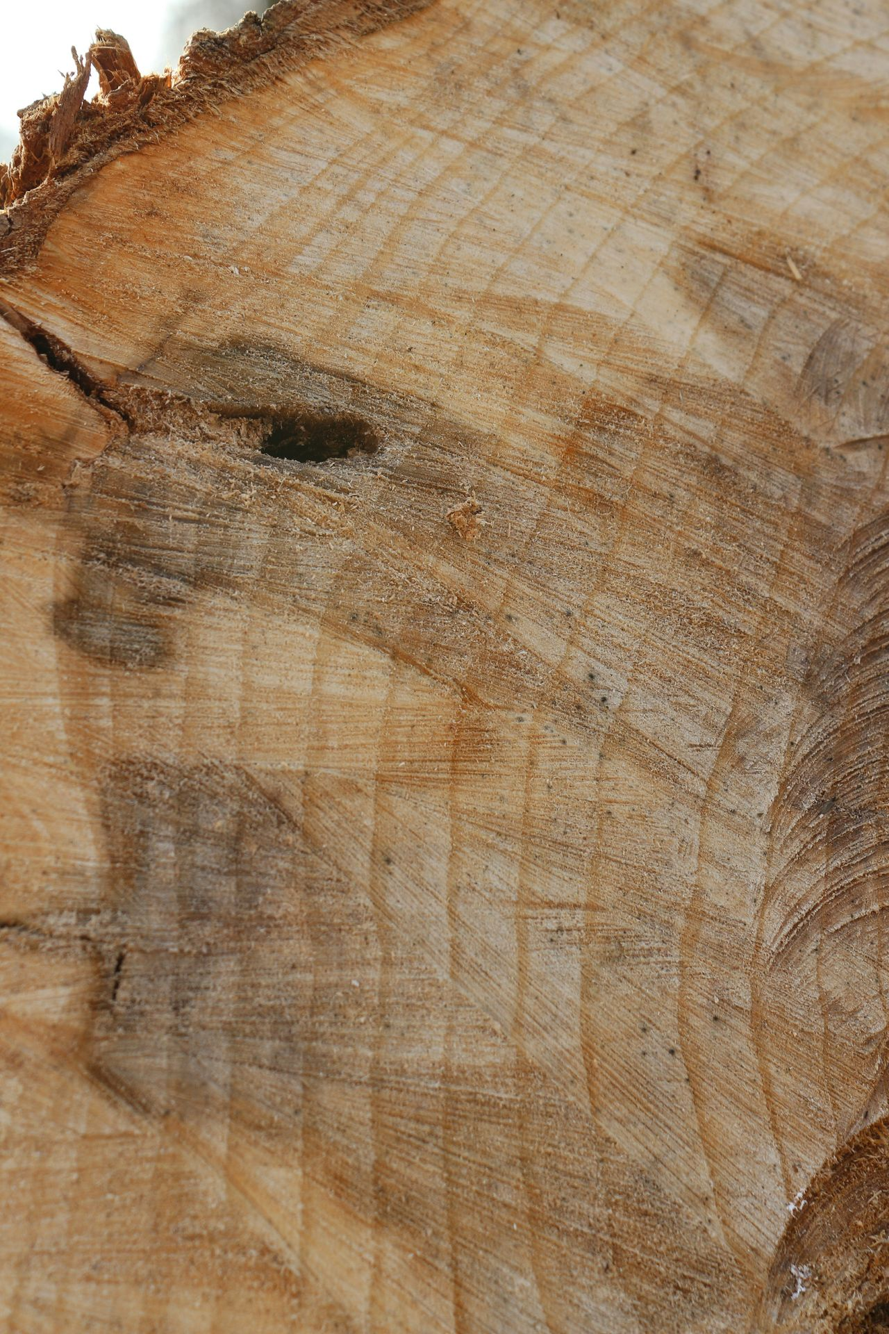 Beautiful stock photos of wood, Backgrounds, Close-Up, Detail, Full Frame