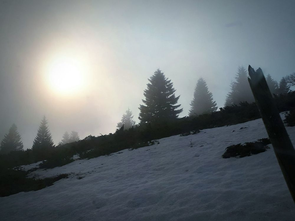 Winter Tree Snow Cold Temperature Nature Landscape Forest Beauty In Nature No People Outdoors Sky Day Fog Tranquility Kopaonik, Serbia Tree Mountain Winter Beauty In Nature