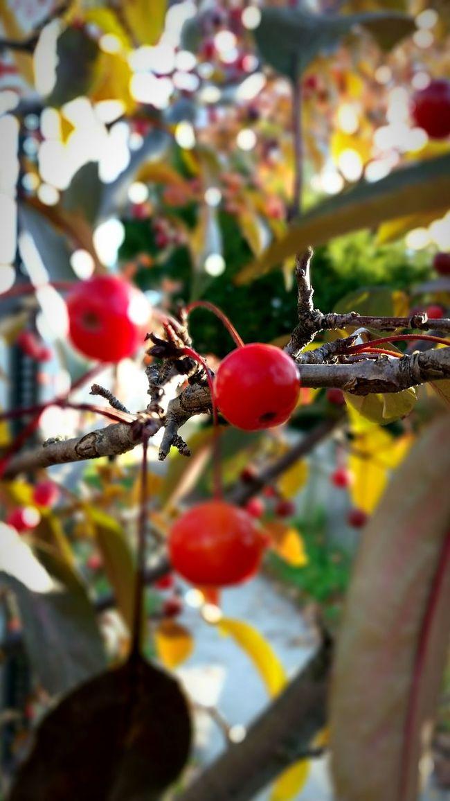 Walking Photographer New Haven Autumn Light EyeEm Best Shots