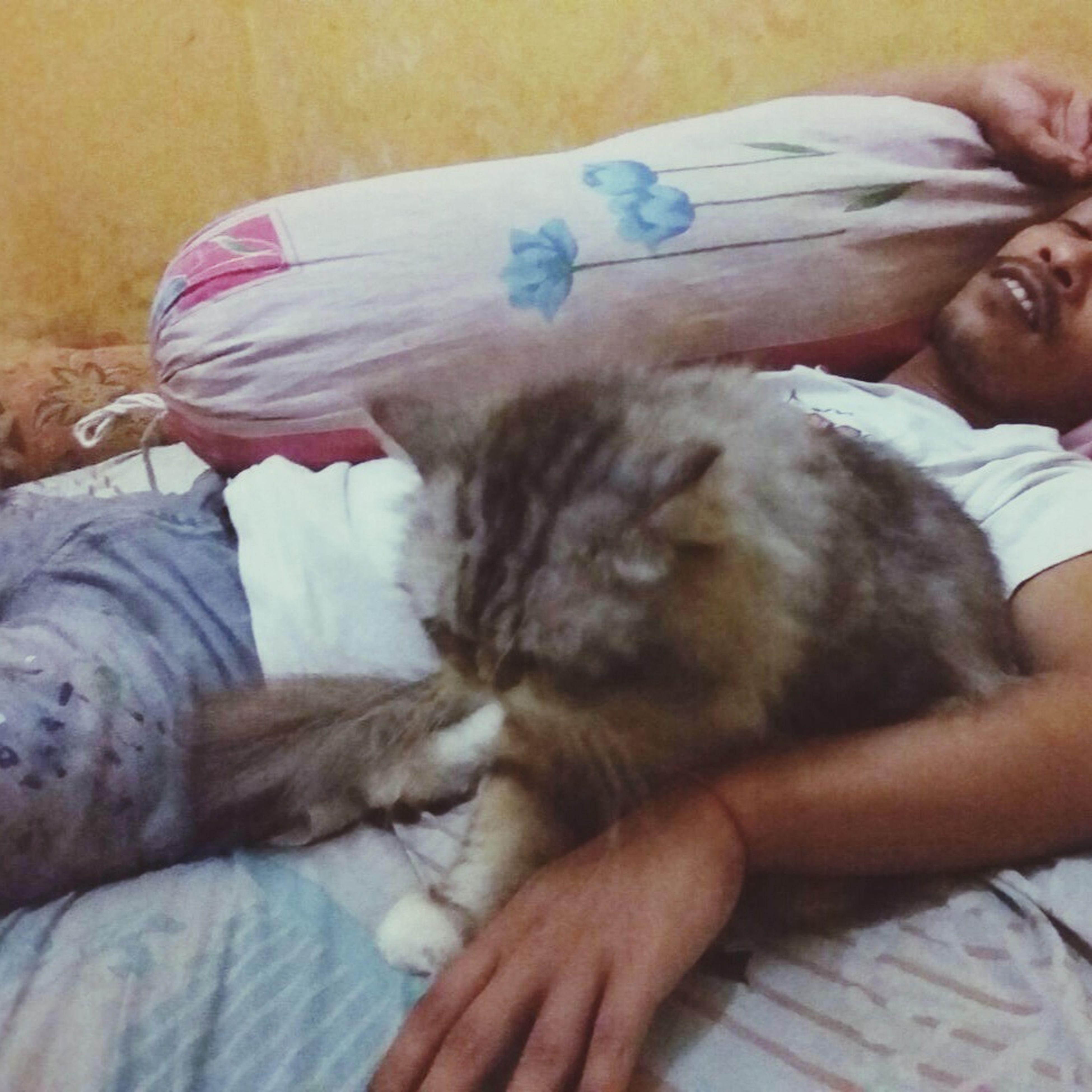 Cat Bed Sleep Sleepy Cute