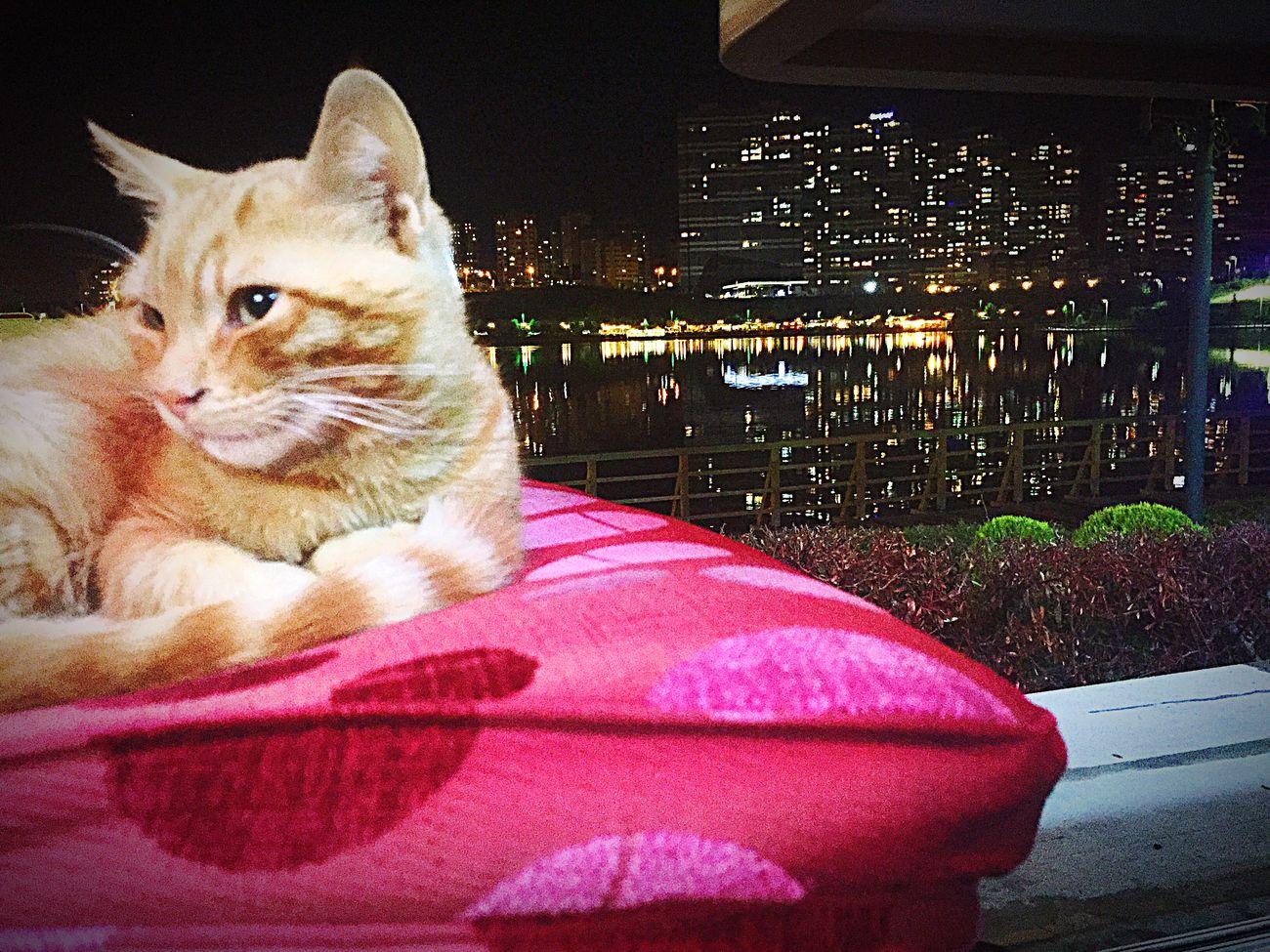 Cat Cat♡ Cats Catsofinstagram Cat Lovers Catsagram Night Goksu Goksupark Eye4photography