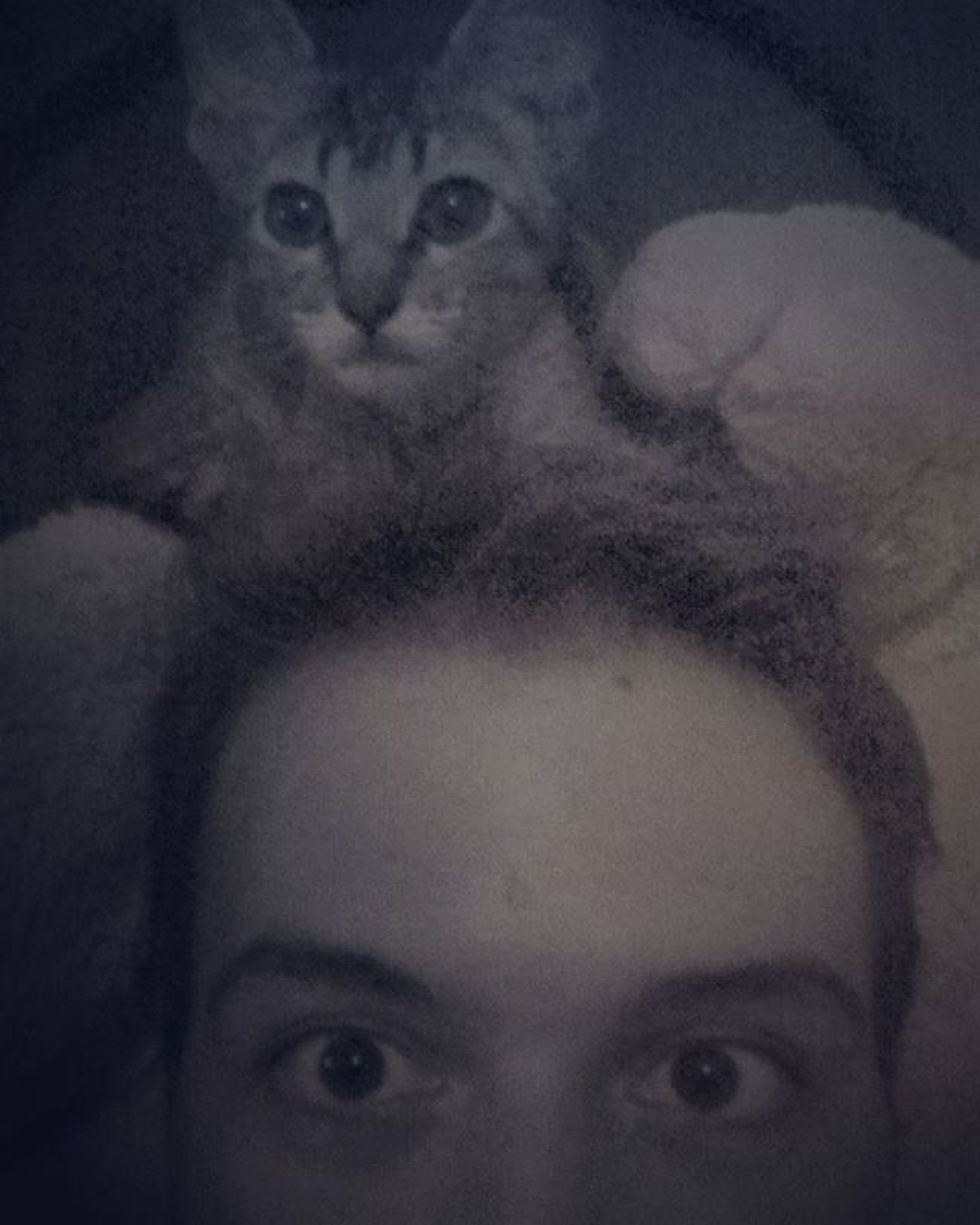 Que susto. Me Yo Cat Gatto Gato Gatao Eyes Ojos Buzios Buziosrj Errejota  Riodejaneiro Rj40graus Brazil Brasil