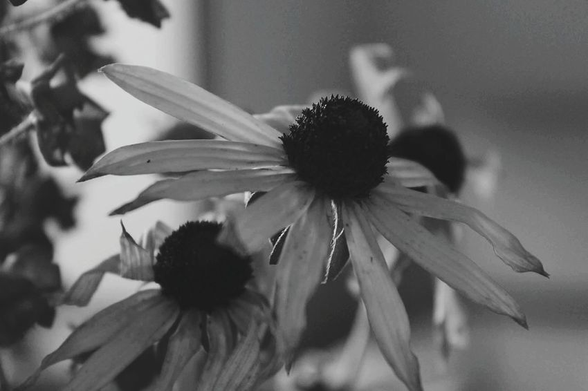No People Nature Beauty In The Darkness Flowers Eyemphotography Eye4photography  EyeEm Best Shots Blackandwhite Black And White