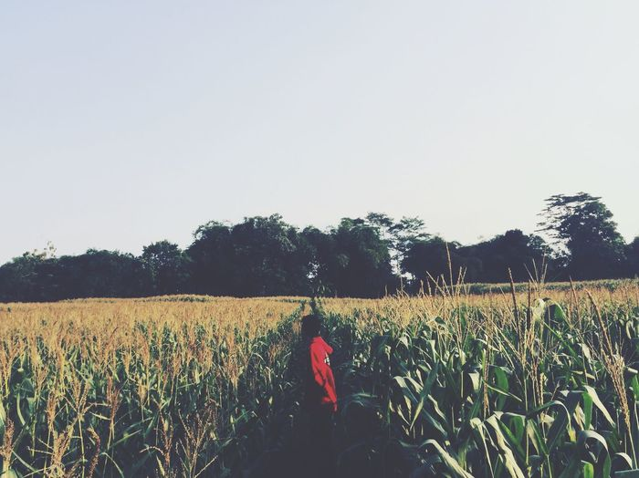 Farm Agriculture Growth Field Rural Scene TheWeekOnEyeEM Cultivated Land Real People Copy Space Rear View Indonesian Silhouette INDONESIA Clear Sky One Person Leisure Activity Nature Outdoors Day The Week On Eyem Original Experiences EyeEm Selects EyeEmNewHere EyeEm Indonesia Adventure