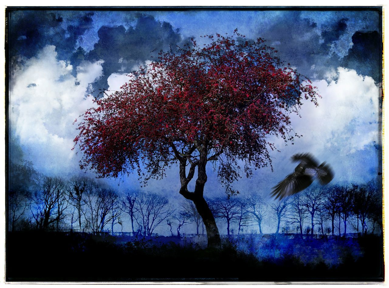 Red Tree Red Tree Spring Montage Trees And Birds Blue Sky Blue Blossom Tree Spring Blossoms Schattenspiel  Protecting Where We Play Night Creative Light And Shadow Turn Your Lights Down Low Art Sorrowscapes Where I Go When I Dream Dream Dreamy