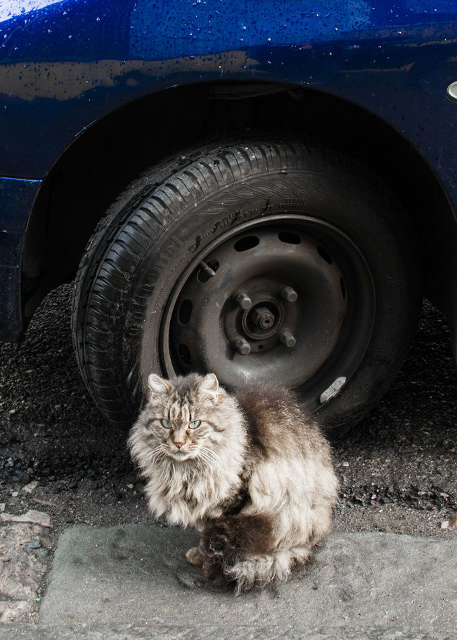 He just wait me all the days and all nights long, just to be shouted. Car Cat Highkey Light And Shadow Street Urban Cat Wheel