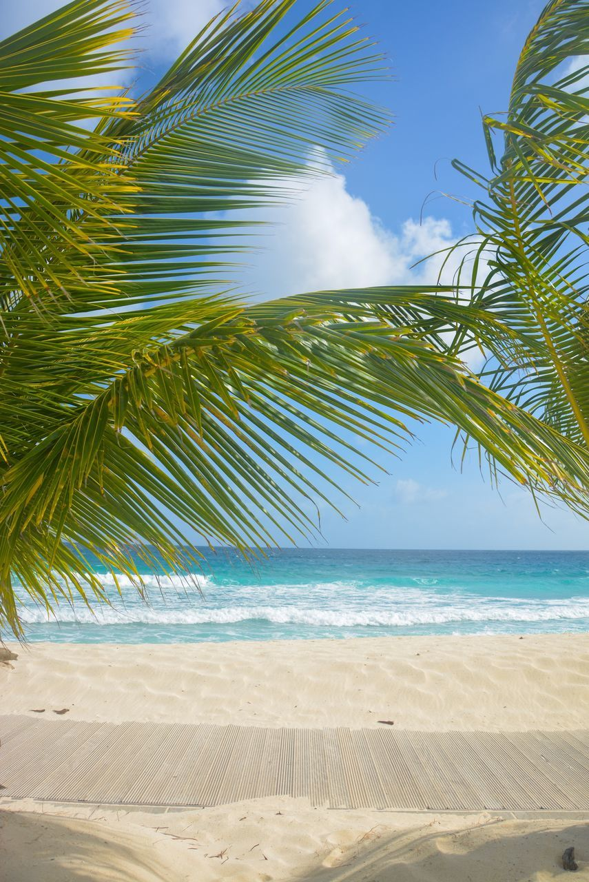 Close-Up Of Palm Trees On Beach