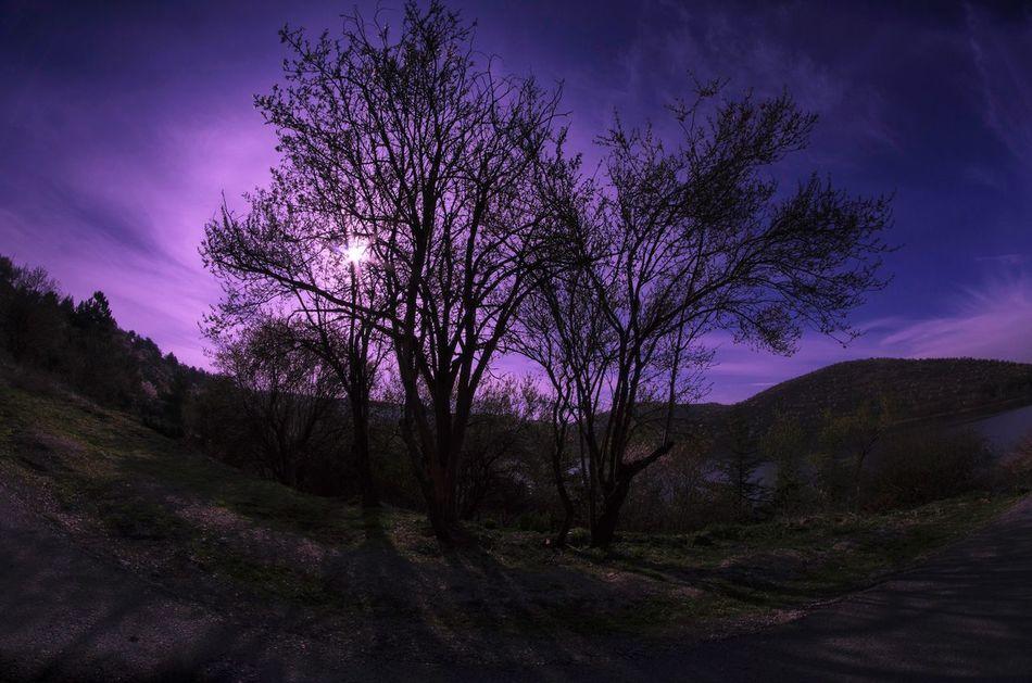 Beautiful stock photos of ankara, Ankara, TURKEY, bare tree, beauty in nature