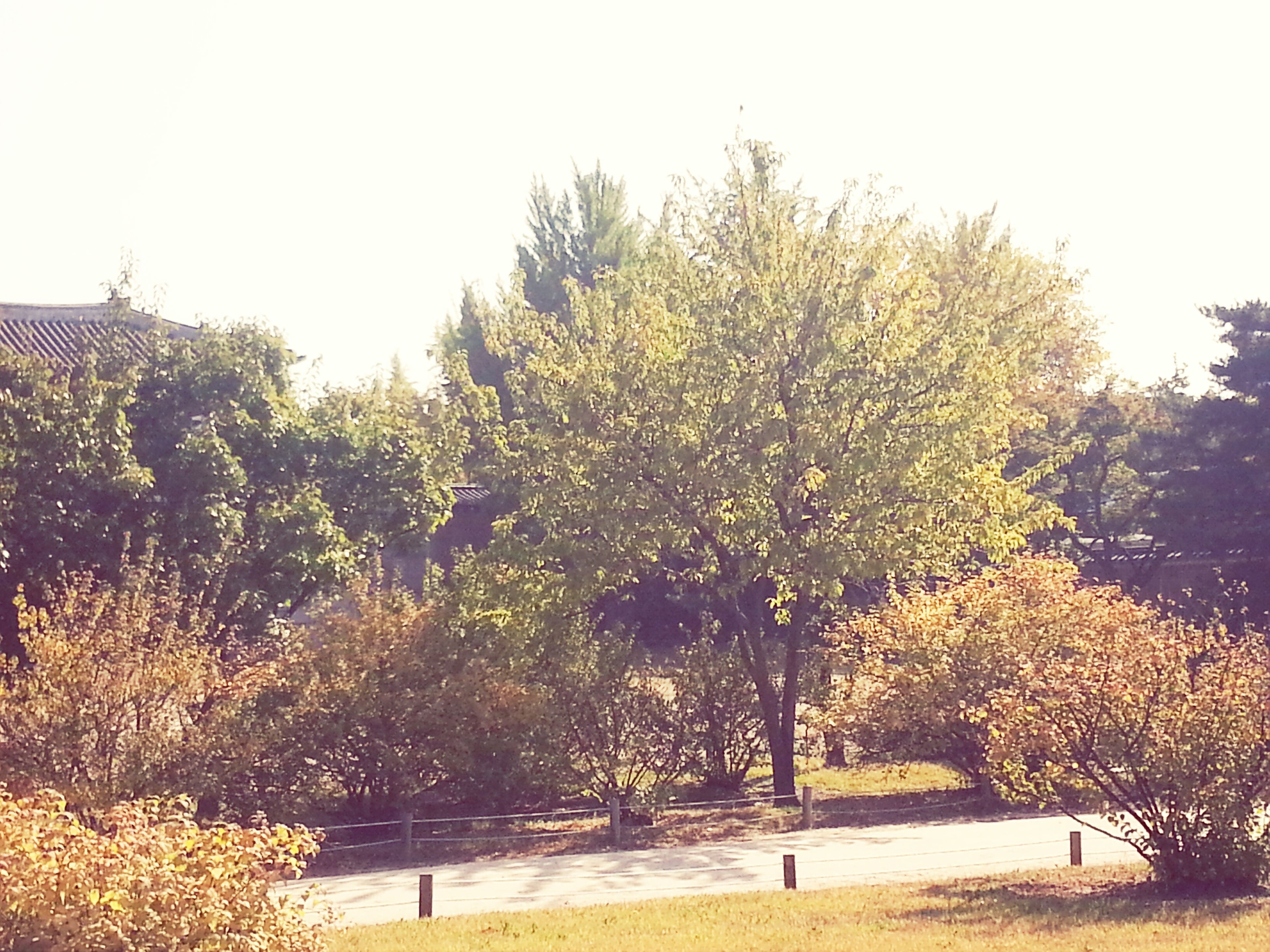 tree, growth, clear sky, tranquility, tranquil scene, nature, beauty in nature, branch, season, autumn, scenics, sky, field, growing, change, day, plant, park - man made space, outdoors, sunlight