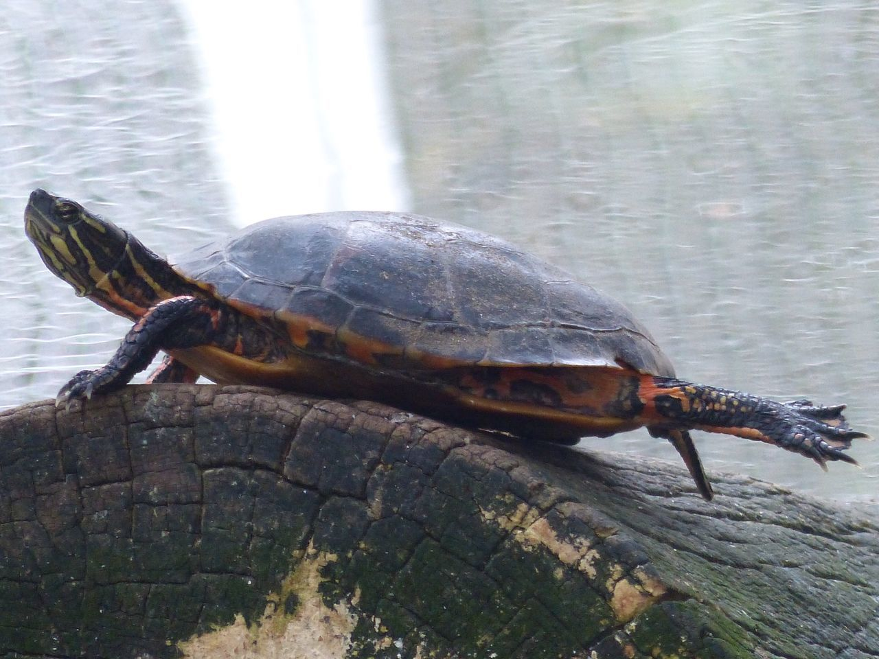 Tortoise Tortuga Turtle Temaiken
