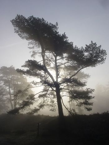 Tree Foggy Morning Misty Morning Special Light Mysterious Mystic Light And Shadow High Contrast