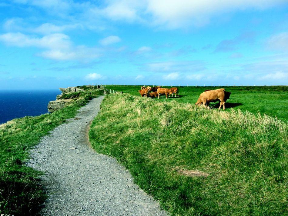 Beautiful stock photos of ireland, Animal Themes, Beauty In Nature, Blue, Cloud - Sky