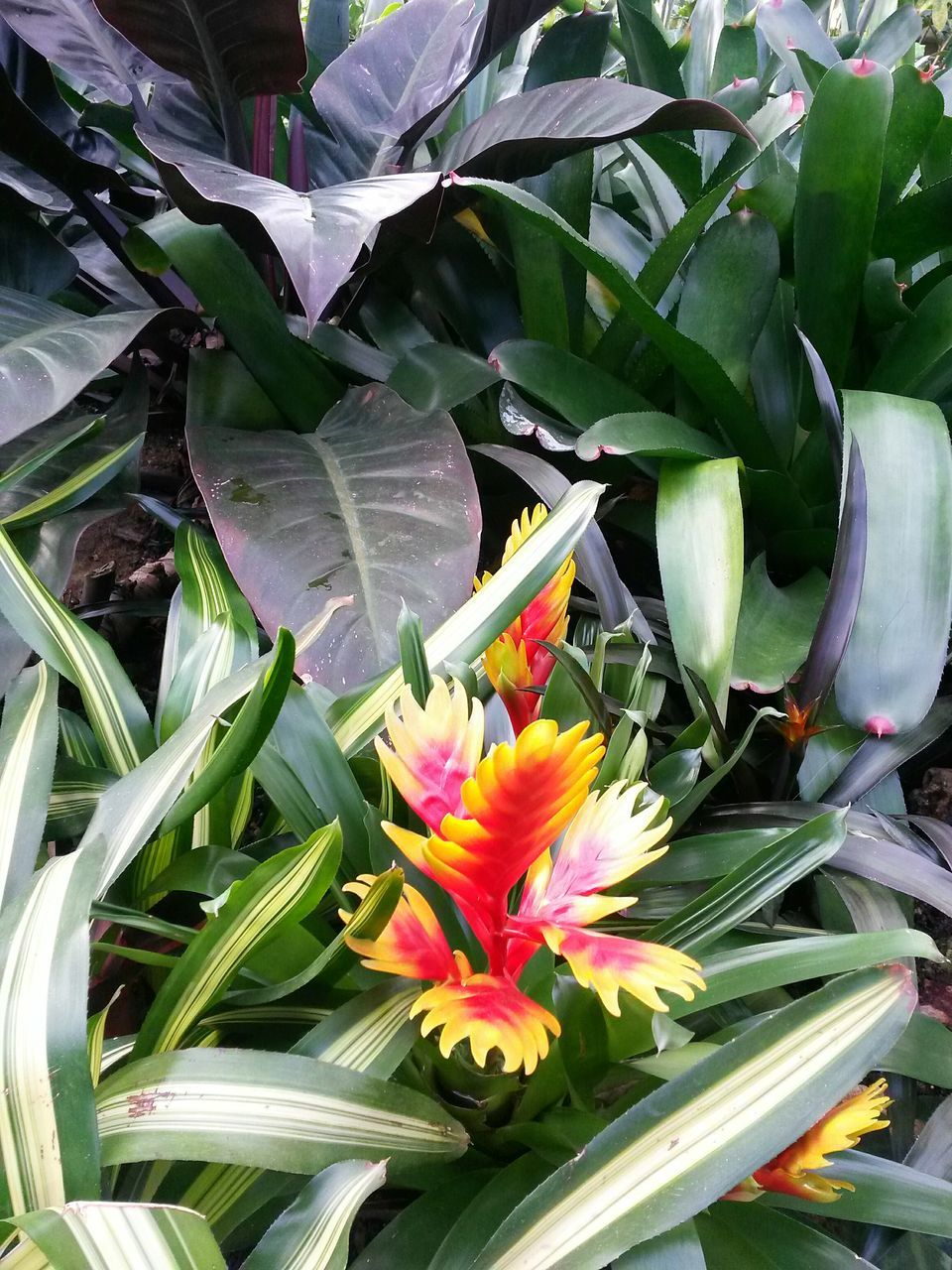 flower, leaf, petal, growth, freshness, fragility, beauty in nature, plant, nature, no people, flower head, day, green color, outdoors, close-up, bird of paradise - plant, blooming