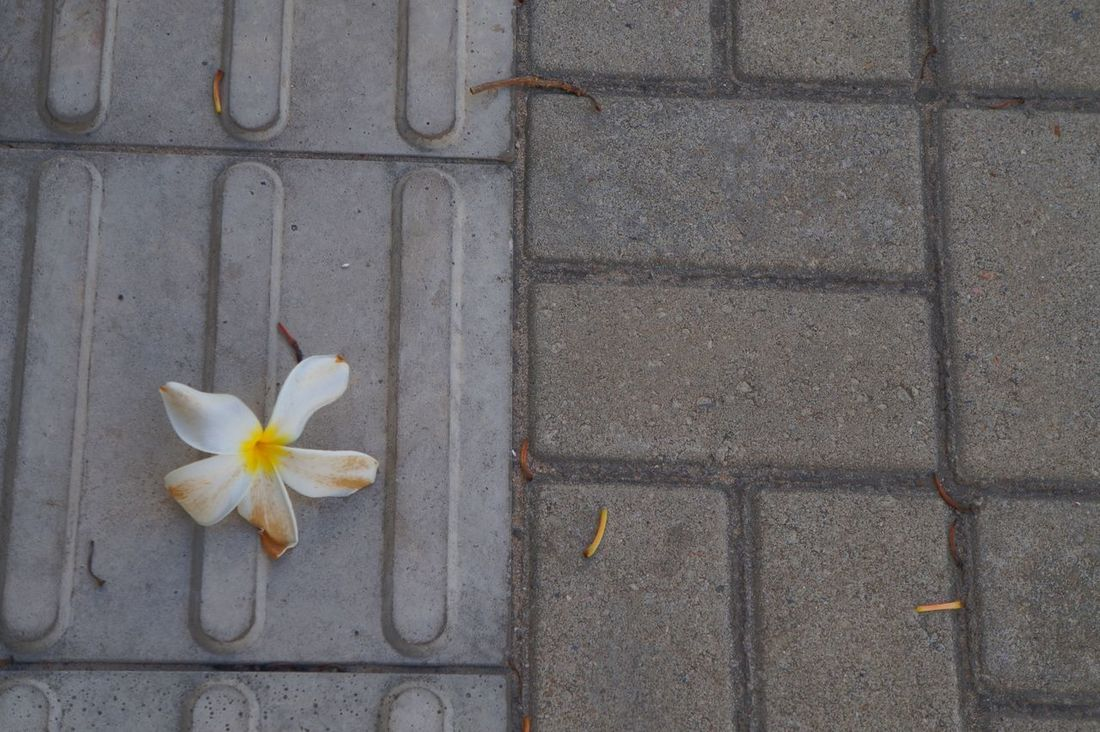 Flor só. Solitary flower Flower Fragility Nature Chao Floor Brazil ❤ Brasil ♥ EyeEmNewHere The Great Outdoors - 2017 EyeEm Awards Paint The Town Yellow
