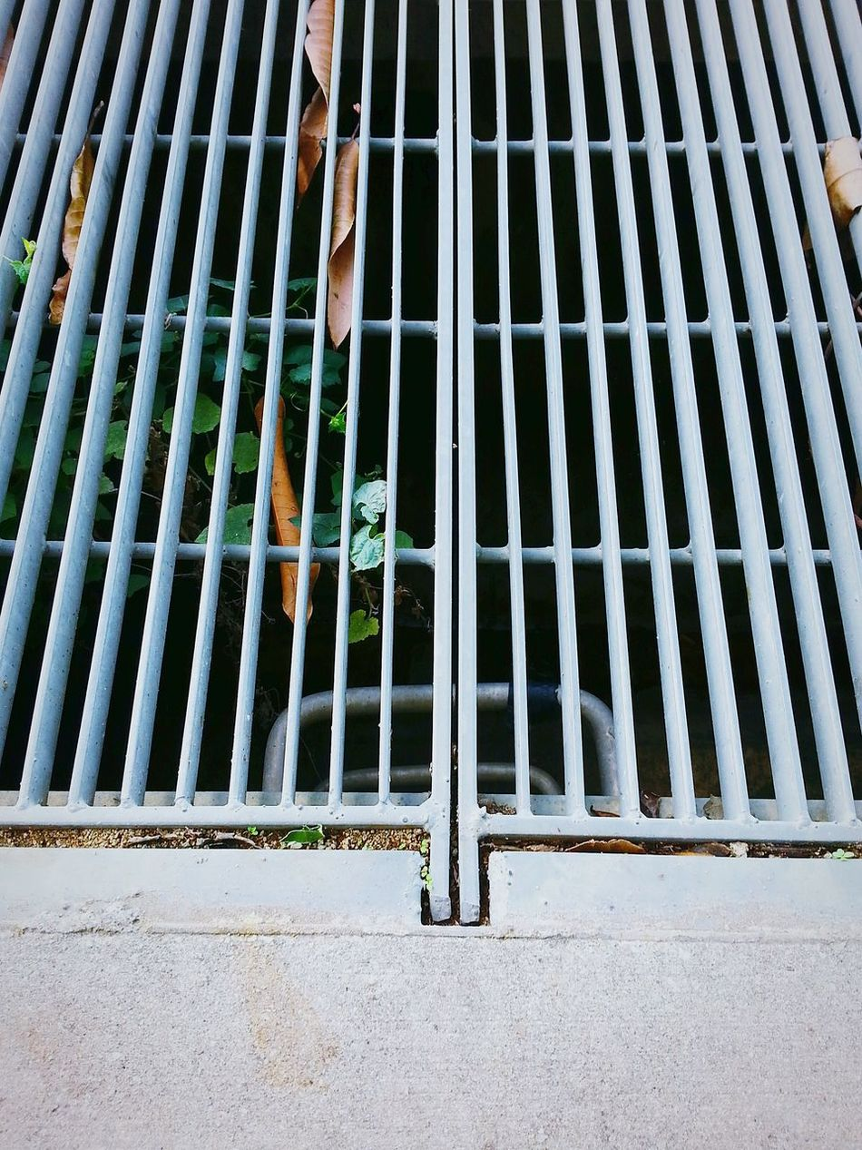 There's a ladder down below! What secrets are lying under the grate? 💭 Grate Fallen Leaves Plant Ladder To Nowhere Ladder Rungs Learn & Shoot: Simplicity