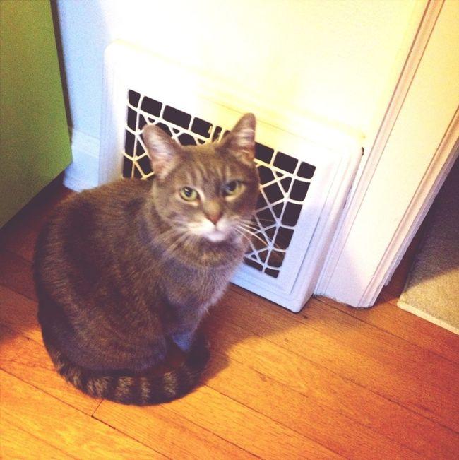 Cat Keeping Warm