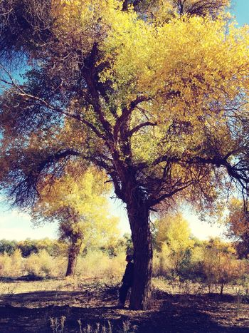 Light And Shadow Hugging A Tree Trees Autumn yellow