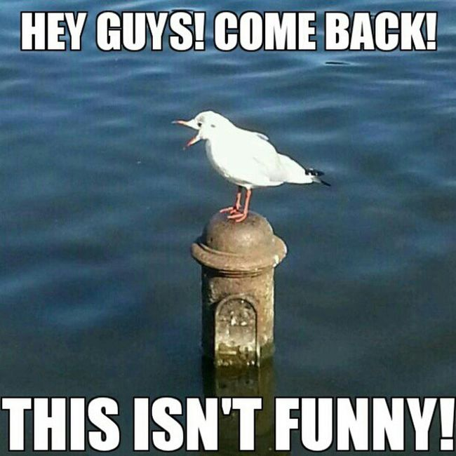 Shoutingbird Bird Cute Nature instagood cool photo seagull meme funny lol haha lmfao instafunny lmao instagram laugh ifunny comic animal reddit instahappy humor funny wacky funnypictures instafun joke jokes