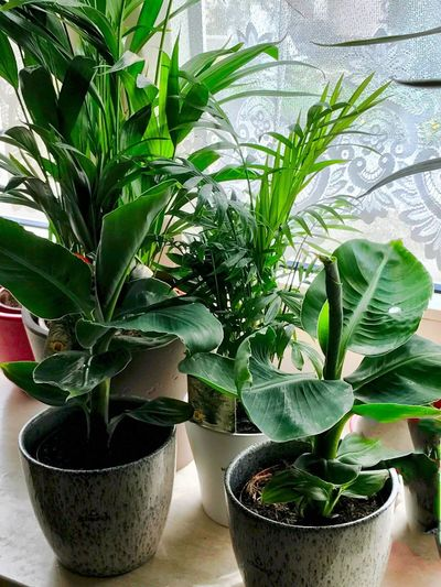 Meine neuen Pflanzen