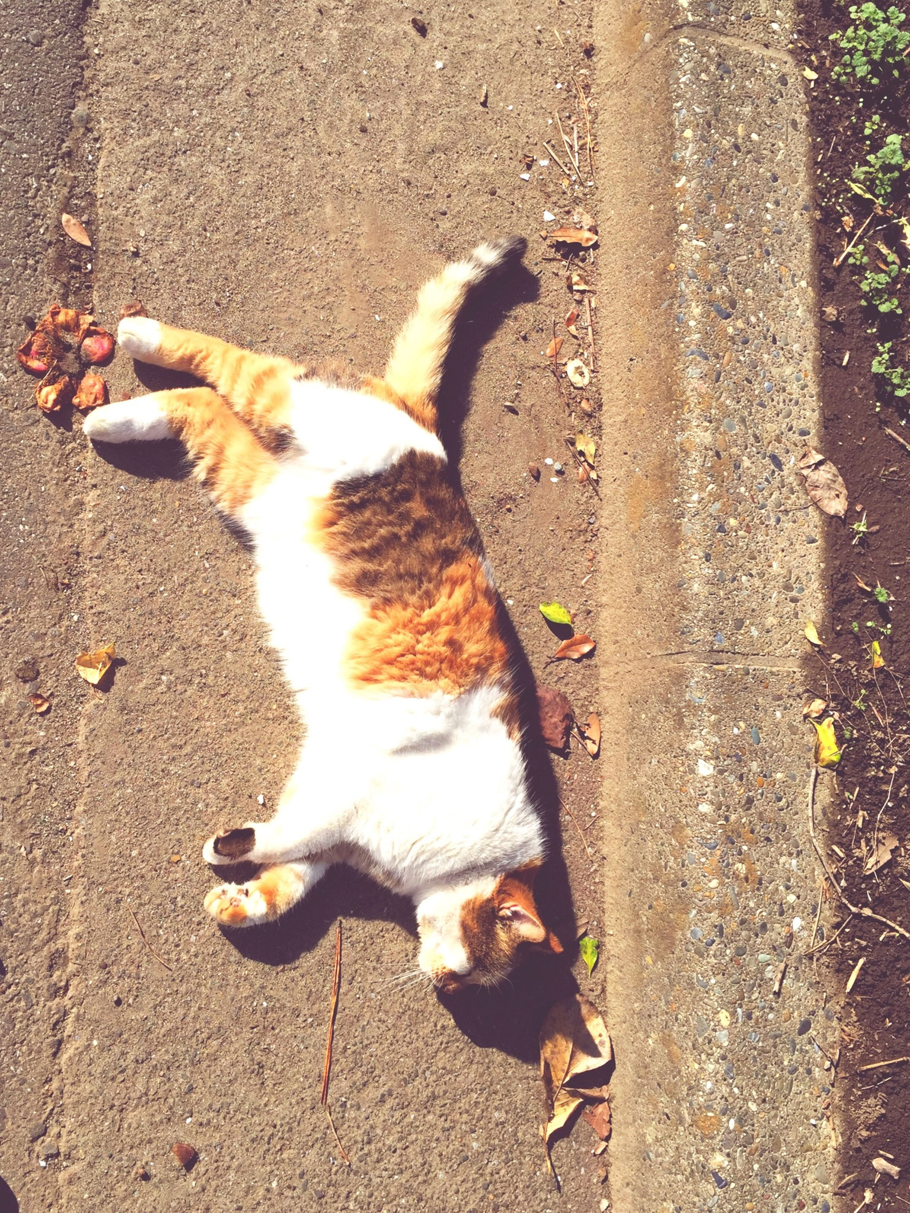 animal themes, domestic animals, pets, one animal, mammal, high angle view, domestic cat, feline, cat, dog, street, full length, sunlight, stray animal, lying down, zoology, two animals, relaxation, outdoors, shadow