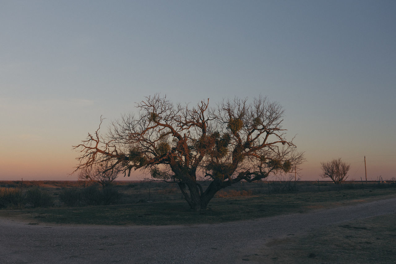 Bare Tree Beauty In Nature Branch Clear Sky Day Landscape Lone Nature No People Outdoors Scenics Sky Sunset Tranquility Tree