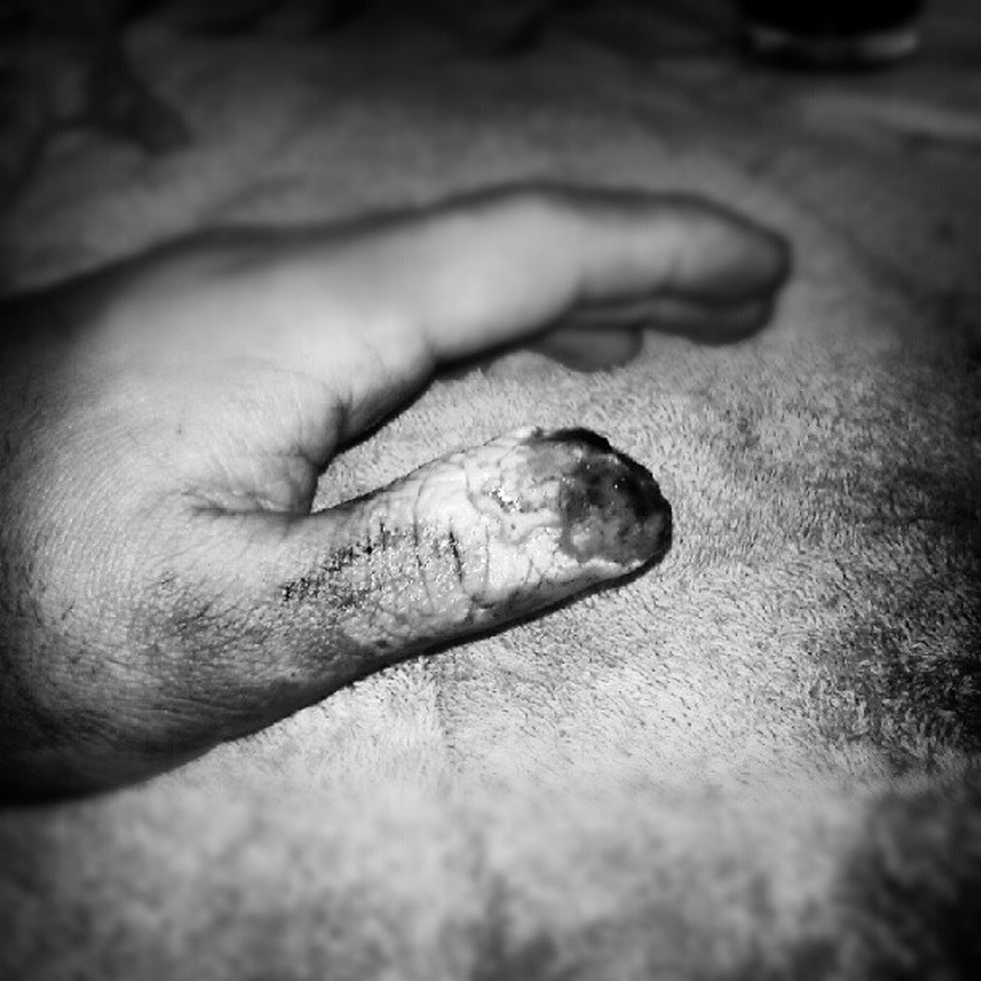 person, part of, human finger, animal themes, close-up, cropped, one animal, unrecognizable person, holding, men, selective focus, wildlife, dead animal, indoors, focus on foreground, lifestyles, day