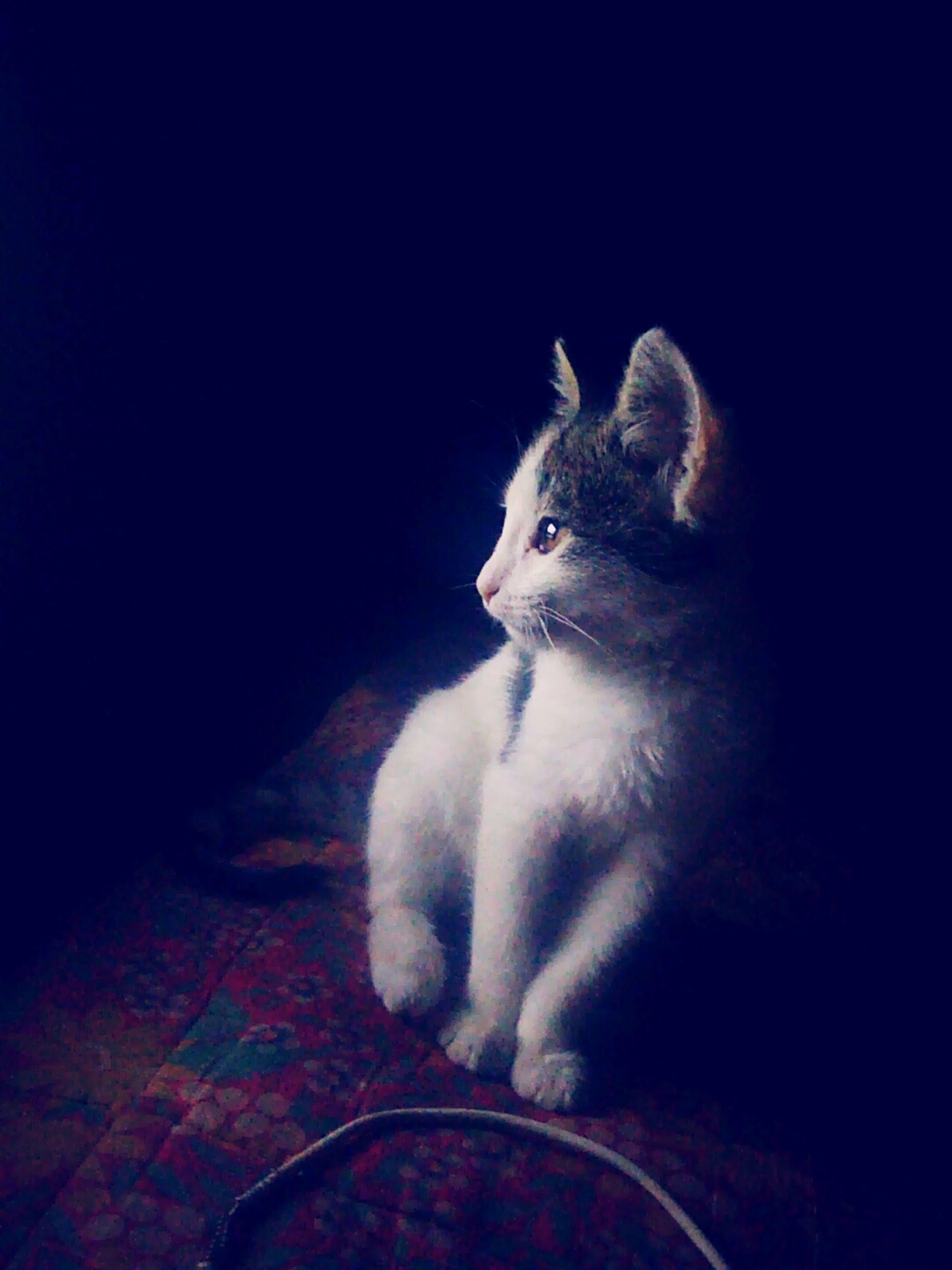 Ночь просмотрфильмов Алиса внимательность Взгляд  прелесть любимка