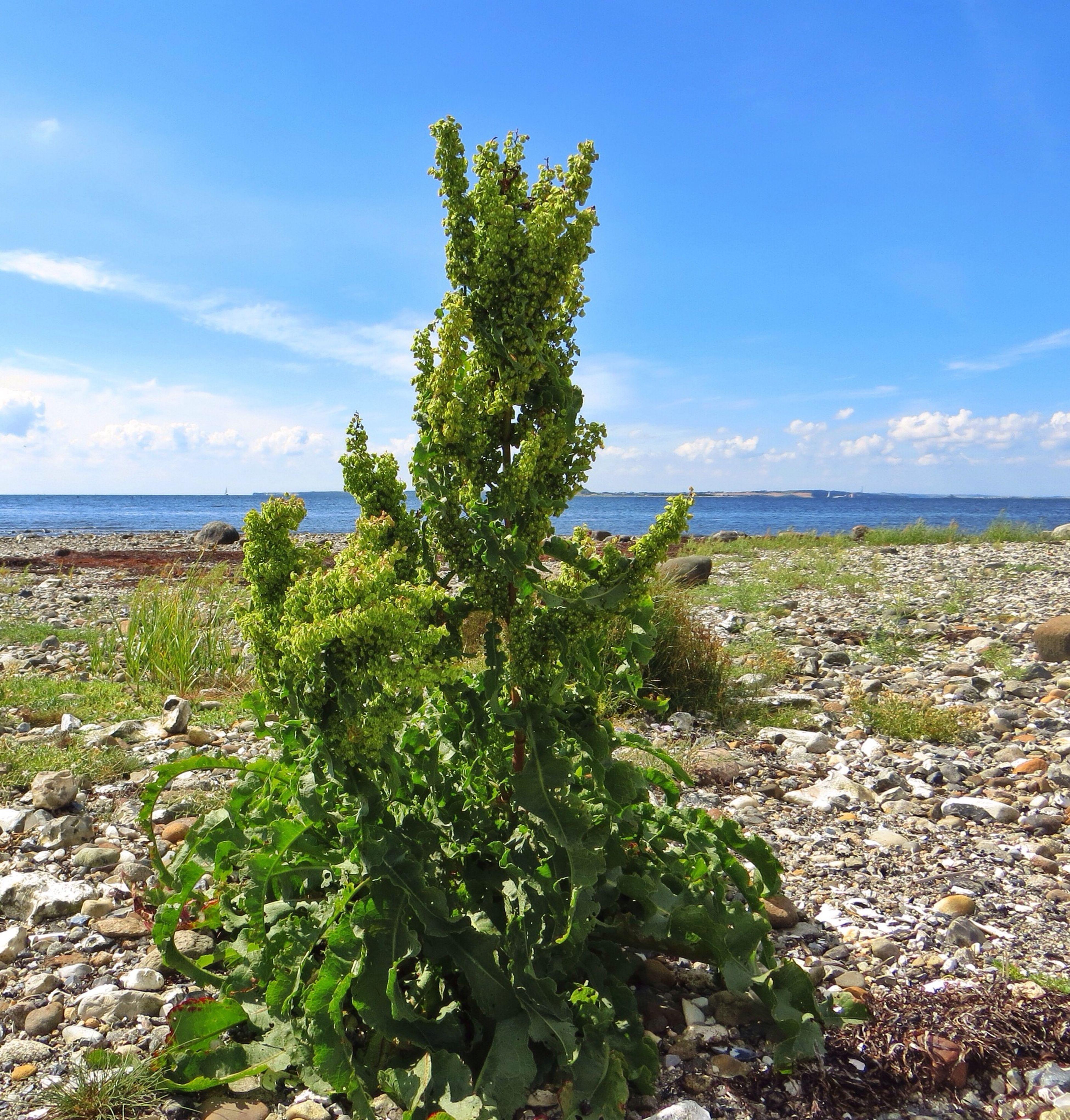 By the Fjord. ☀️ Enjoying Nature Eyem Best Shots Tadaa Community