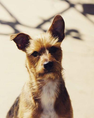 @marniethedog (boyfriend) Dog Ziess85mm Ziess Bestfriend Thanos Pet Doggies Thereelhero Ruff Puppy Puppies Followme Hiremeplease Brystahh