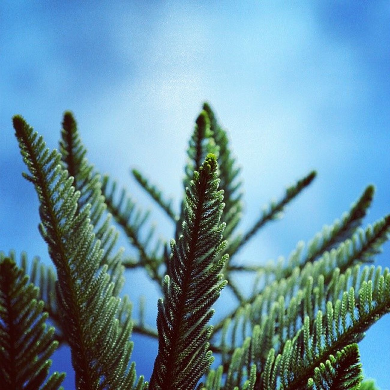 Pine! MacroLadilla