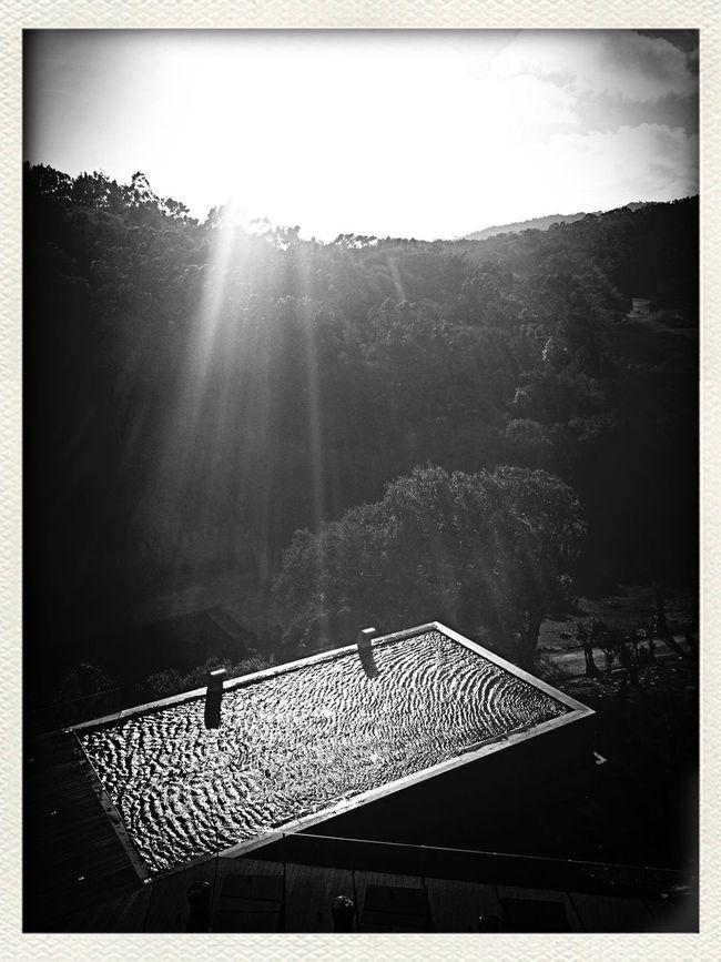Water Reflectionss Monochrome Swimming Sunshine